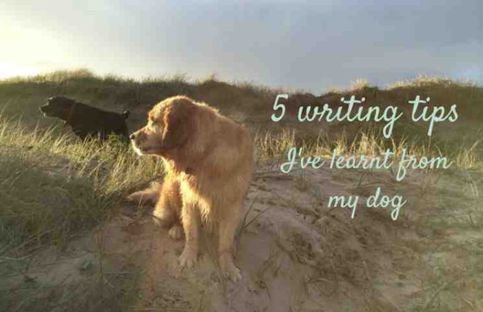 5 writing tips i've learnt from my dog