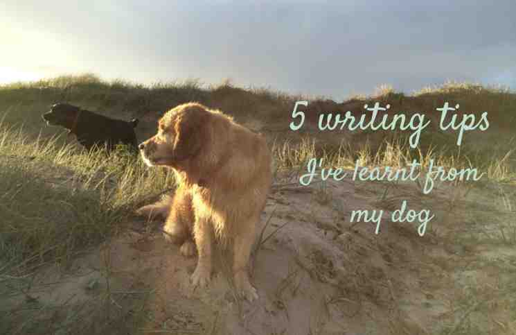 5 lessons I've learnt about writing from my dog